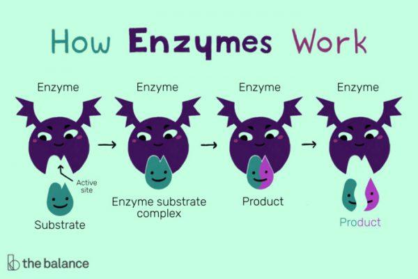 Hình ảnh enzyme là gì 1