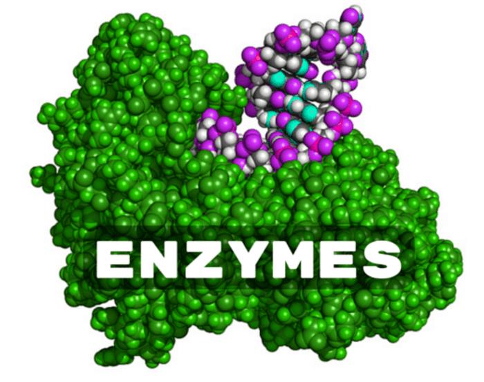 hinh-anh-enzyme-la-gi-3
